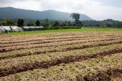 Organischer Gemüsegarten und Berge Stockfotografie