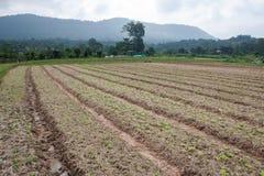 Organischer Gemüsegarten und Berge Stockfoto