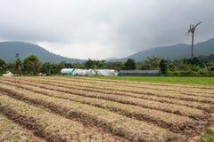 Organischer Gemüsegarten und Berge Stockfotos