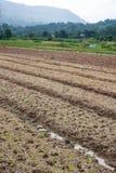 Organischer Gemüsegarten und Berge Lizenzfreies Stockbild