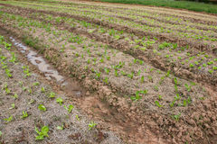 Organischer Gemüsegarten und Berge Lizenzfreie Stockfotografie