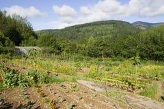 Organischer Gemüseplan Stockbild