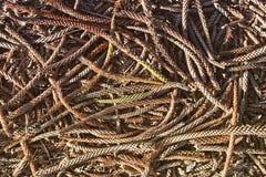 Organischer Kiefernnadelhintergrund Stockfotos