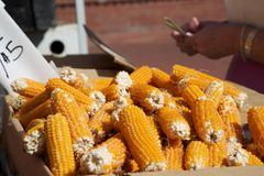 Organischer Mais Stockfotografie
