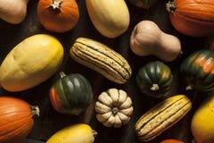 Organischer sortierter Autumn Squash Stockbild