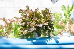 Organischer Wasserkulturgemüseanbaubauernhof lizenzfreie stockfotografie