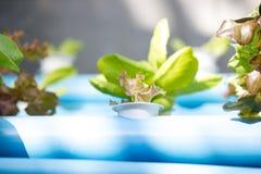Organischer Wasserkulturgemüseanbaubauernhof stockbild
