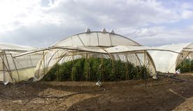 Organischer Wasserkulturgemüseanbaubauernhof an der Landschaft, Jordan Valley Lizenzfreie Stockbilder