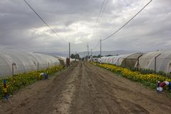 Organischer Wasserkulturgemüseanbaubauernhof an der Landschaft, Jordan Valley Stockfoto