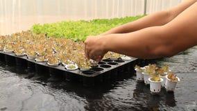 Organischer Wasserkulturgemüsebauernhof stock video footage