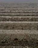 Organisches Ackerland bereit zum Pflanzen Stockfotografie