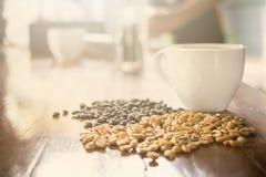 Organisches Arabica Kaffee des thailändischen Elefantscheißekaffees stockfoto
