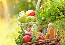 Organisches Gemüse Stockfotografie