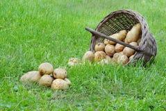 Organisches Gemüse Stockfoto