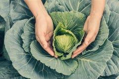 Organisches Gemüse in den Händen Landwirtholding und geerntetes frisches lizenzfreie stockfotos