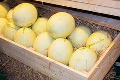 Organisches Gemüse und Frucht sät Lizenzfreie Stockfotografie
