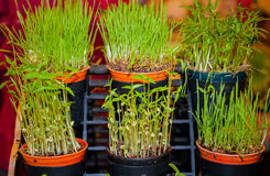 Organisches Gemüse und Frucht sät Lizenzfreies Stockfoto