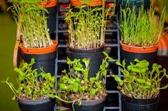 Organisches Gemüse und Frucht sät Lizenzfreies Stockbild