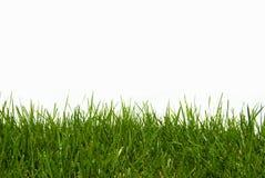 Organisches grünes Gras getrennt auf Weiß Lizenzfreies Stockfoto