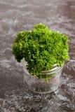 Organisches neues Bündel Petersilie in einem Glasgefäß Stockbilder