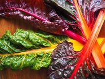 Organisches Regenbogen-Mangoldgemüse Stockfotos