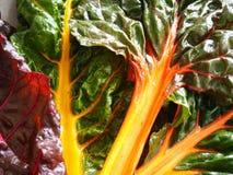 Organisches Regenbogen-Mangoldgemüse Stockbild