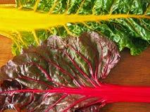 Organisches Regenbogen-Mangoldgemüse Lizenzfreies Stockbild