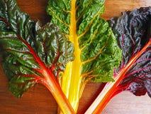 Organisches Regenbogen-Mangoldgemüse Stockfoto