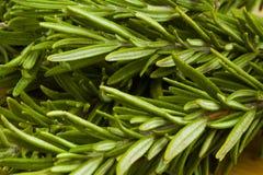 Organisches Rosmarinkraut des frischen Gartens Lizenzfreie Stockfotografie