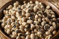 Organisches trockenes Black Eyed Peas Lizenzfreies Stockbild
