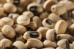 Organisches trockenes Black Eyed Peas Lizenzfreie Stockfotos