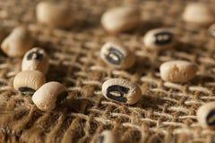 Organisches trockenes Black Eyed Peas Stockfotos