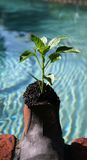 Organisches Wachstum Stockbild