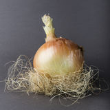 Organisches Zwiebel-Nest Stockfotos
