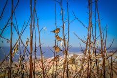 Organiserade fåglar, Capadoccia, Turkiet Royaltyfri Bild