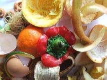 organisk avfalls Royaltyfria Bilder