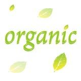 Organisk bladlogo eller etikett Fotografering för Bildbyråer