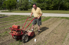 Organisk bonde Cultivating Between Rows i en varm sol Royaltyfri Foto