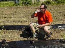 Organisk bonde Taking ett vattenavbrott Royaltyfri Foto