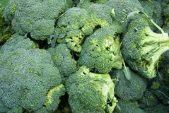 organisk broccoli Arkivfoto