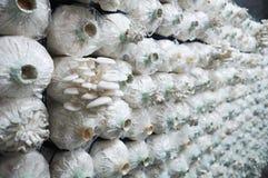 Organisk champinjonlantgård Royaltyfria Bilder