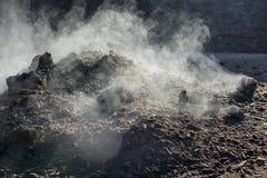 organisk compost Arkivbilder
