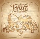 Organisk dragen illustration för frukt hand Arkivbilder