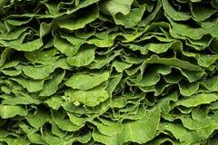 Organisk friskhet för mat för grönsakbondemarknad Royaltyfria Foton