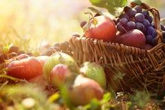 Organisk frukt i sommargräs Arkivfoto
