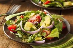 Organisk grön Avacado och tomatsallad Arkivbild