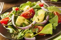 Organisk grön Avacado och tomatsallad Royaltyfria Foton