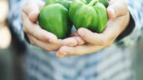 Organisk grön frukt för peppar i manhänder arkivfilmer