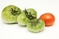 Organisk, grön och röd tomat på vit bakgrund Royaltyfri Bild