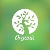 Organisk grön trädlogo, ecoemblem, ekologi Arkivfoton
